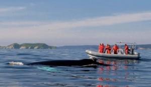 Witless Bay - Zodiac Ecotours tourism